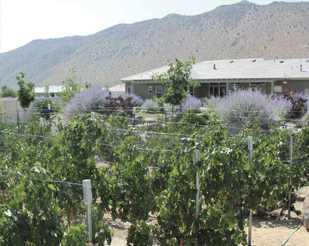 feature backyard vineyards 1